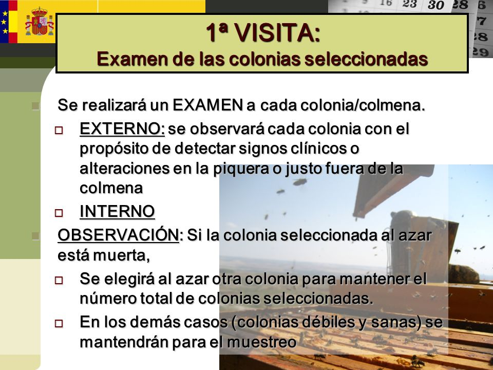 1ª VISITA: Examen de las colonias seleccionadas