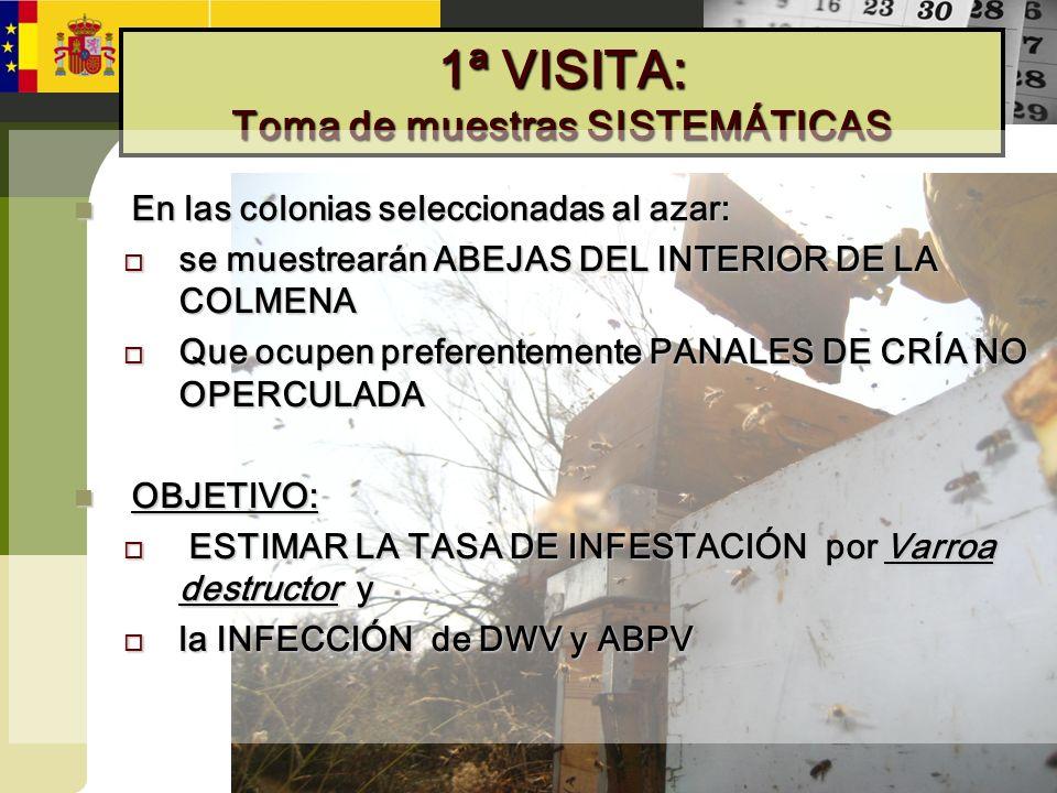 1ª VISITA: Toma de muestras SISTEMÁTICAS