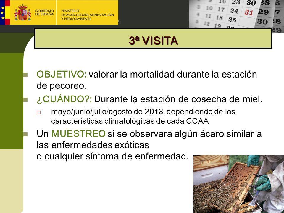 3ª VISITA OBJETIVO: valorar la mortalidad durante la estación de pecoreo. ¿CUÁNDO : Durante la estación de cosecha de miel.