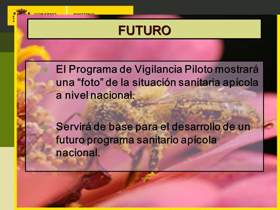 FUTURO El Programa de Vigilancia Piloto mostrará una foto de la situación sanitaria apícola a nivel nacional.