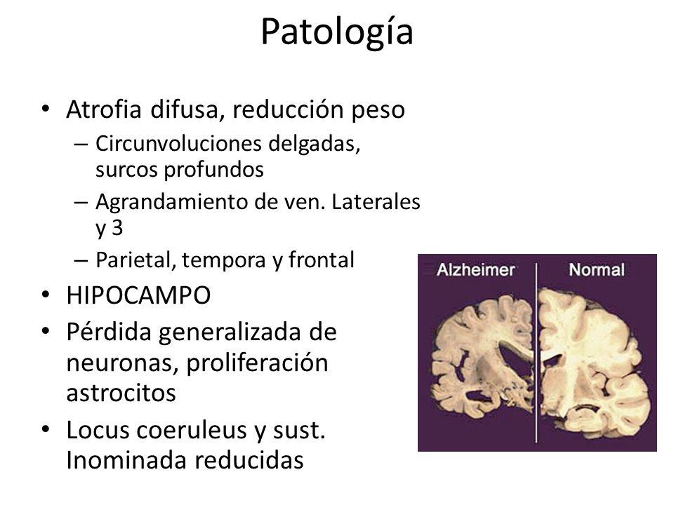 Patología Atrofia difusa, reducción peso HIPOCAMPO