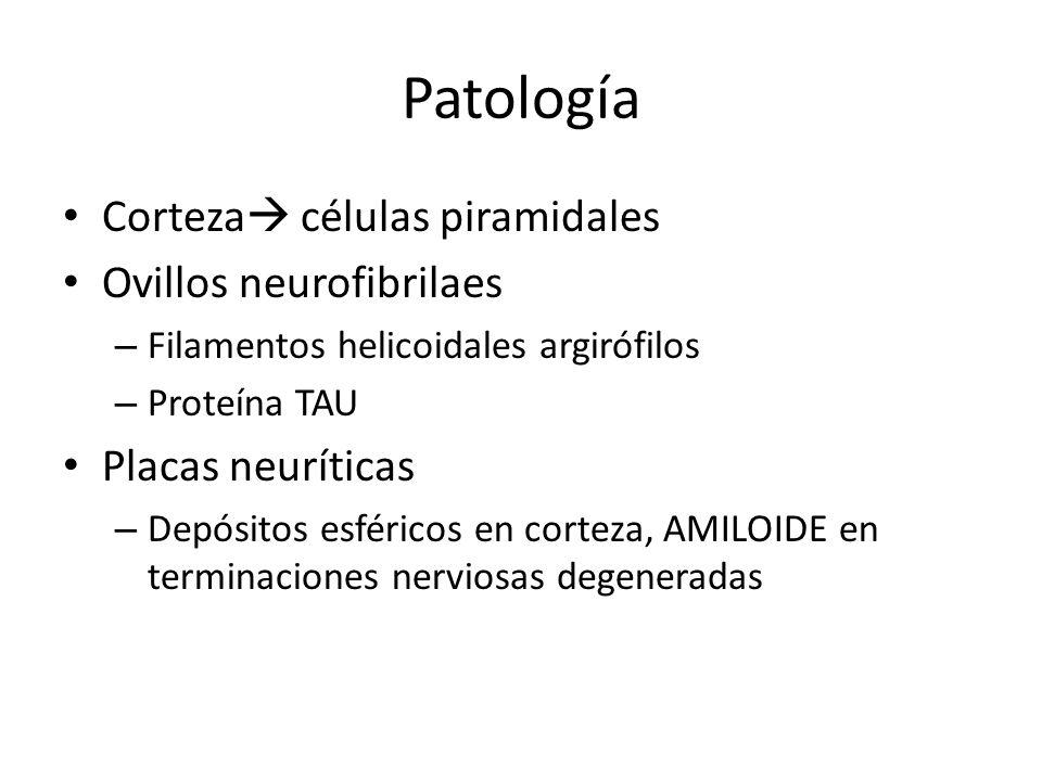 Patología Corteza células piramidales Ovillos neurofibrilaes