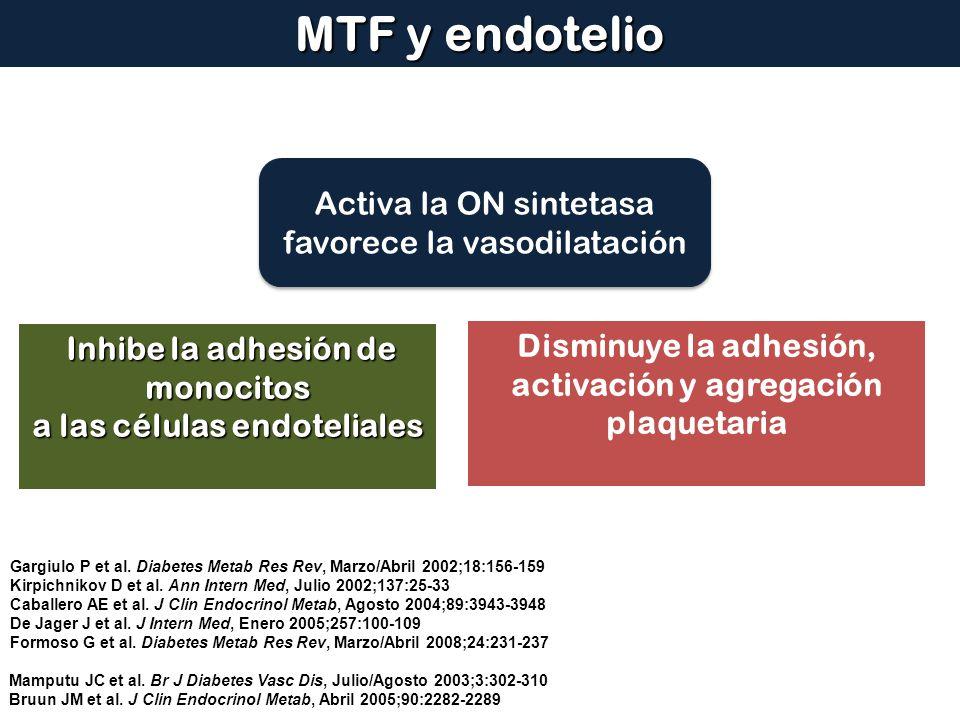 MTF y endotelio Activa la ON sintetasa favorece la vasodilatación