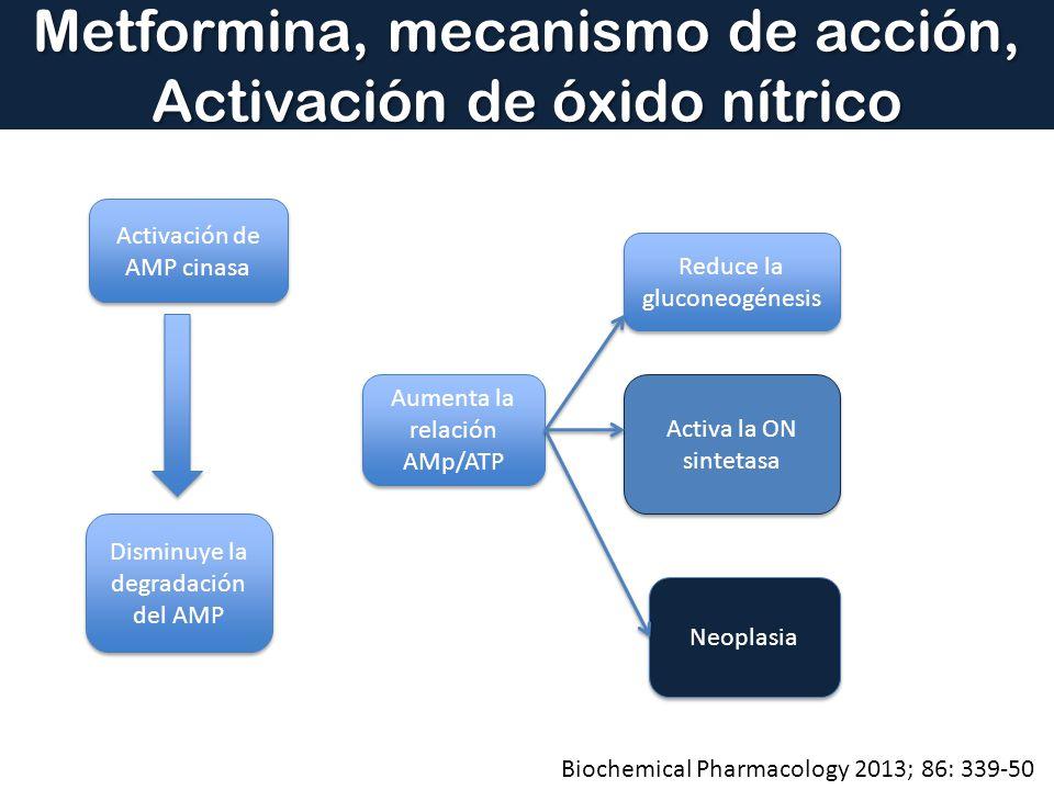 Metformina, mecanismo de acción, Activación de óxido nítrico