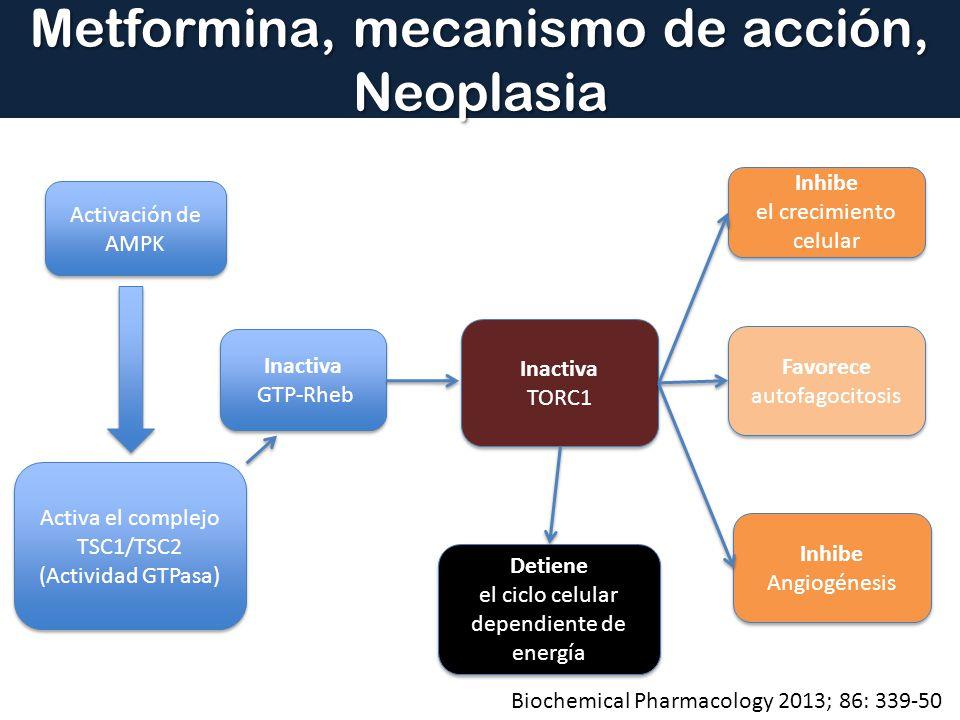 Metformina, mecanismo de acción, Neoplasia