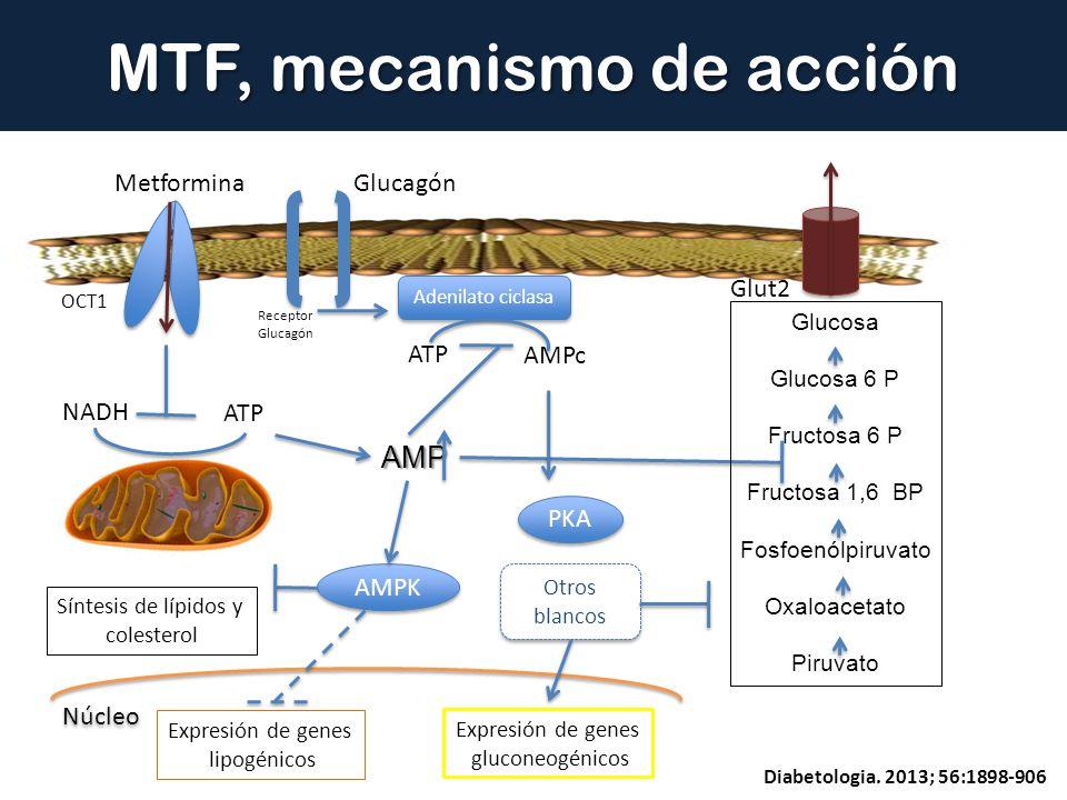 MTF, mecanismo de acción