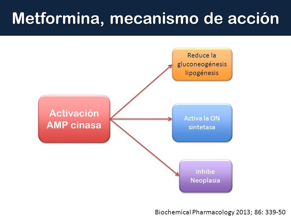Metformina, mecanismo de acción