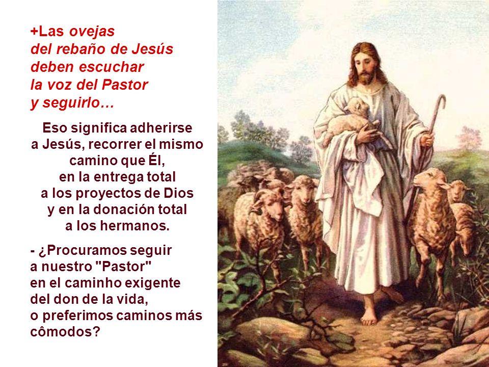 del rebaño de Jesús deben escuchar la voz del Pastor y seguirlo…