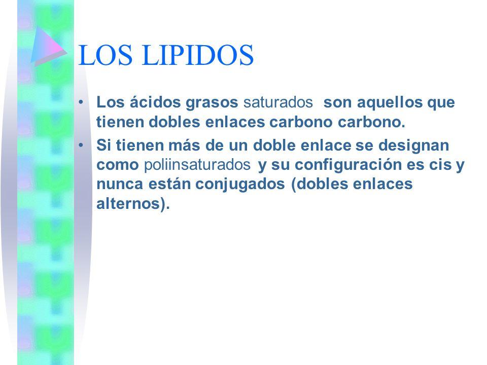 LOS LIPIDOS Los ácidos grasos saturados son aquellos que tienen dobles enlaces carbono carbono.