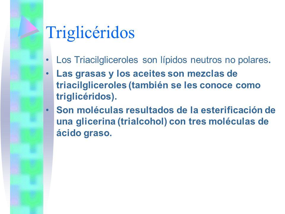 Triglicéridos Los Triacilgliceroles son lípidos neutros no polares.