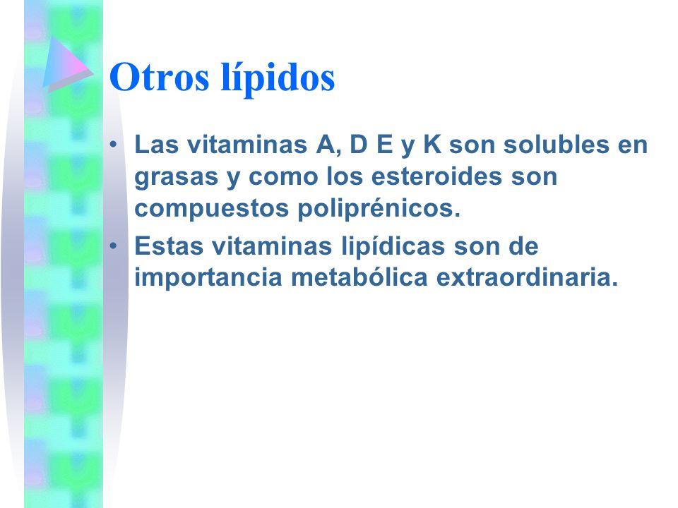 Otros lípidos Las vitaminas A, D E y K son solubles en grasas y como los esteroides son compuestos poliprénicos.