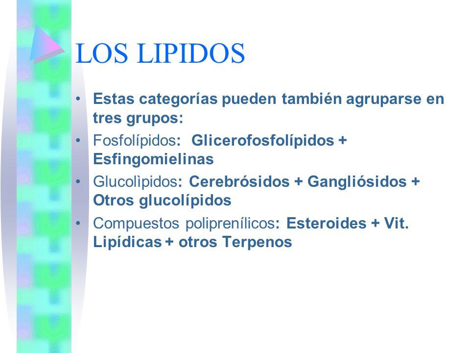 LOS LIPIDOS Estas categorías pueden también agruparse en tres grupos: