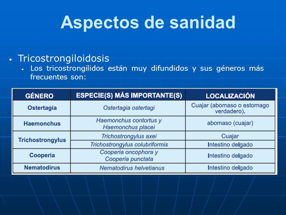 Aspectos de sanidad Tricostrongiloidosis