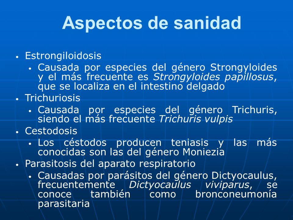 Aspectos de sanidad Estrongiloidosis