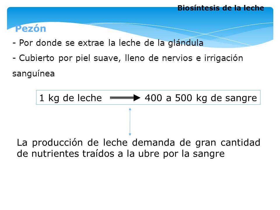 1 kg de leche 400 a 500 kg de sangre