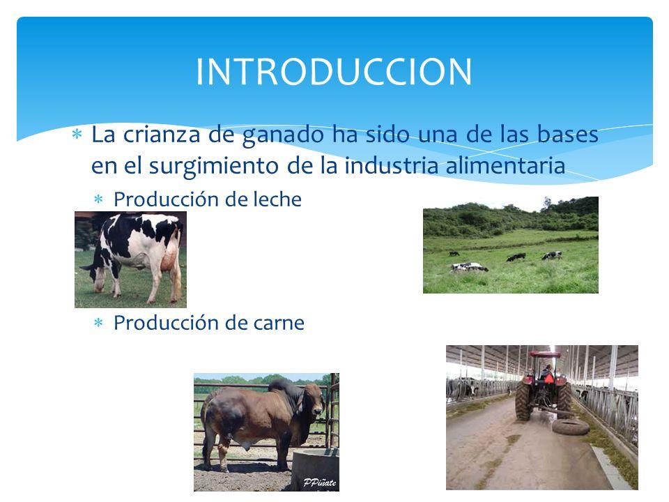 INTRODUCCIONLa crianza de ganado ha sido una de las bases en el surgimiento de la industria alimentaria.