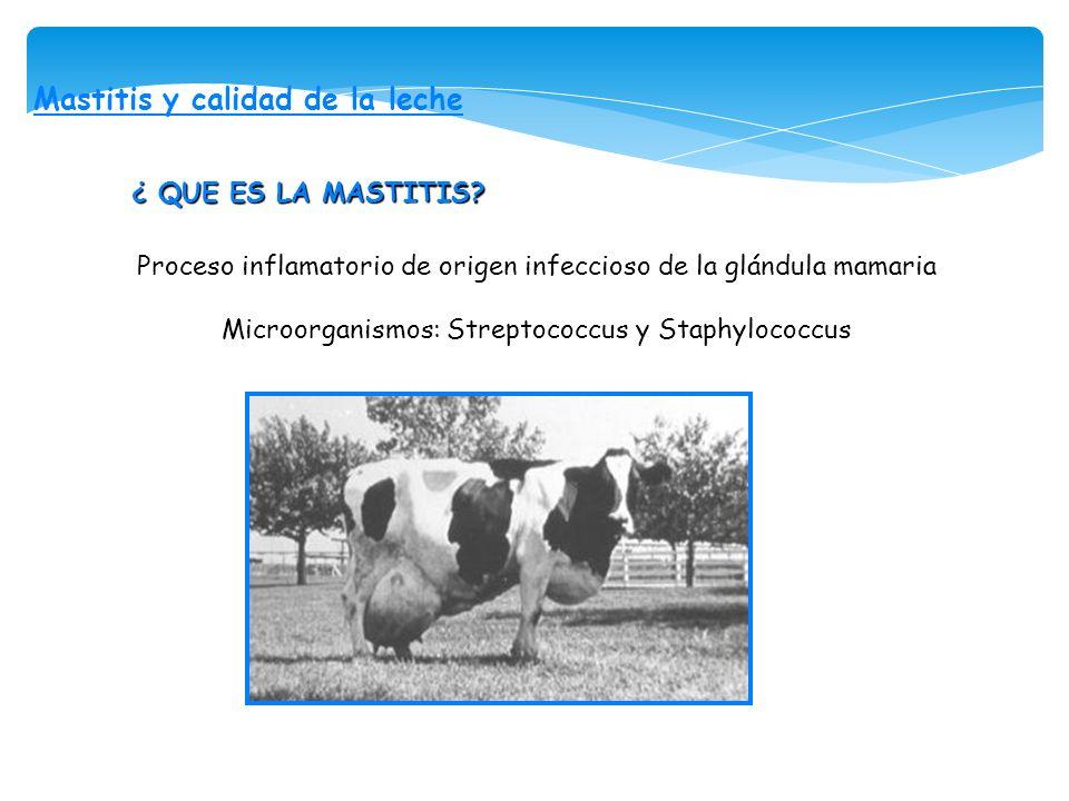 Mastitis y calidad de la leche