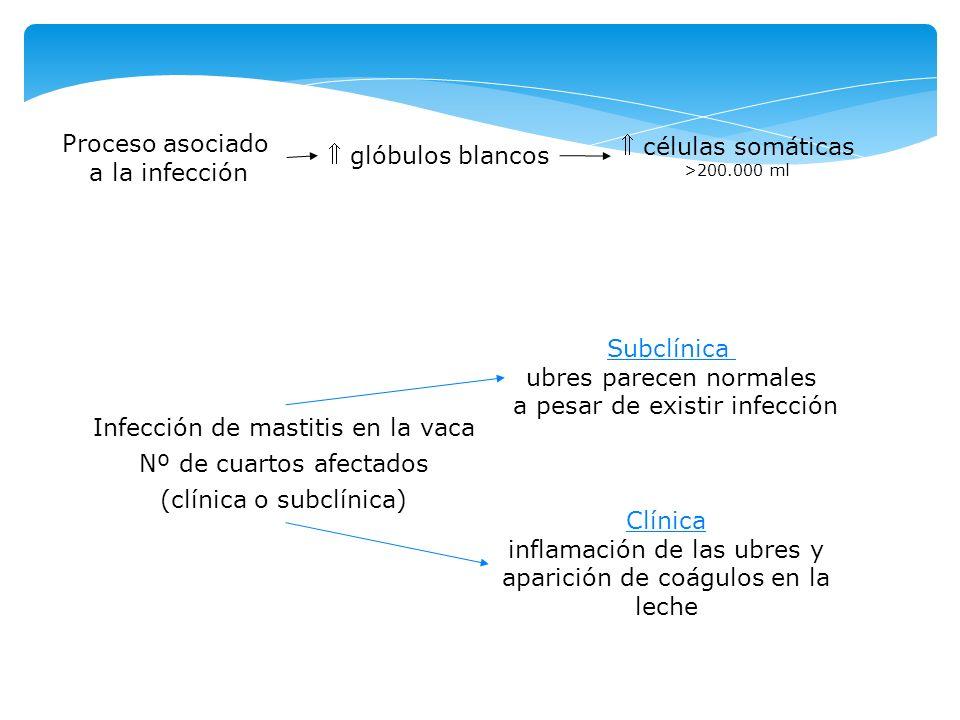 Infección de mastitis en la vaca Nº de cuartos afectados