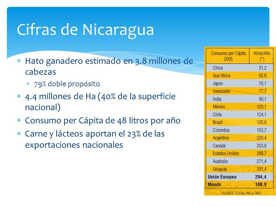 Cifras de Nicaragua Hato ganadero estimado en 3.8 millones de cabezas