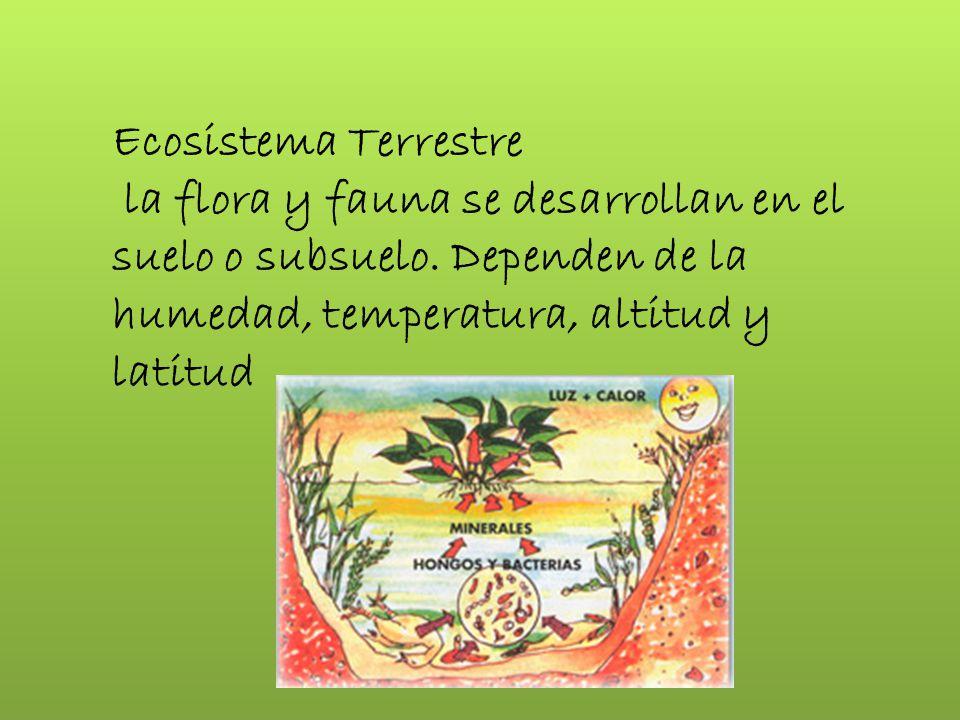 Ecosistema Terrestre la flora y fauna se desarrollan en el suelo o subsuelo.