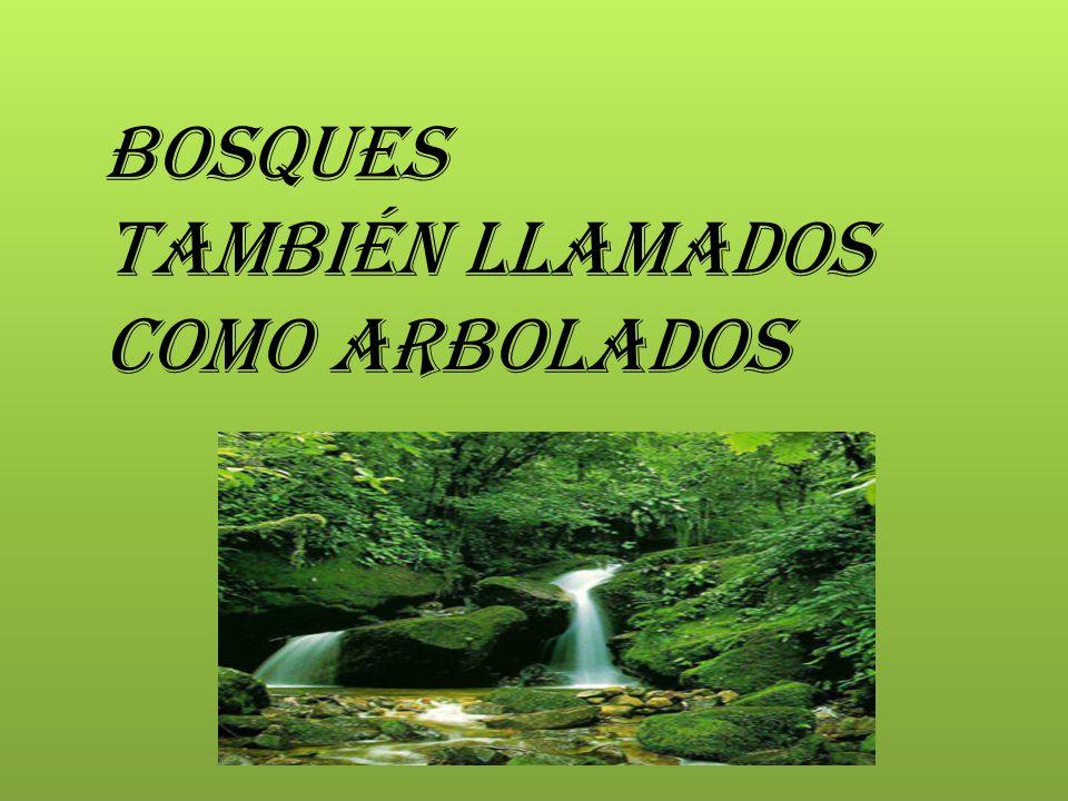 Bosques También llamados como Arbolados