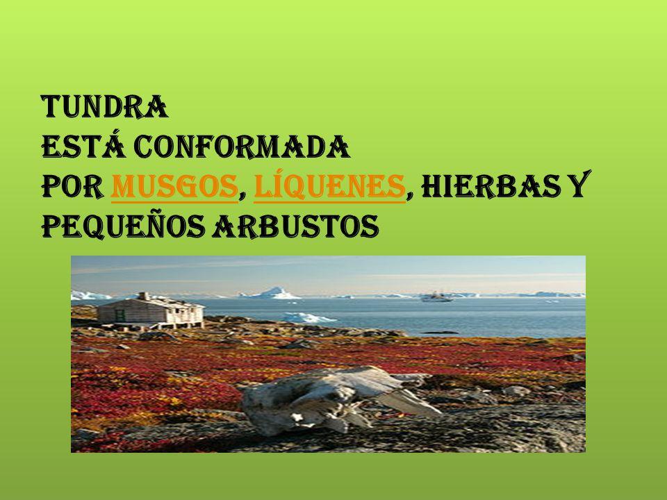 Tundra está conformada por musgos, líquenes, hierbas y pequeños arbustos