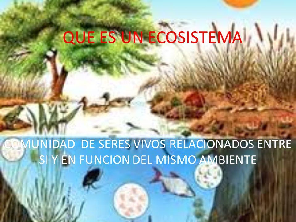 QUE ES UN ECOSISTEMA COMUNIDAD DE SERES VIVOS RELACIONADOS ENTRE SI Y EN FUNCION DEL MISMO AMBIENTE.