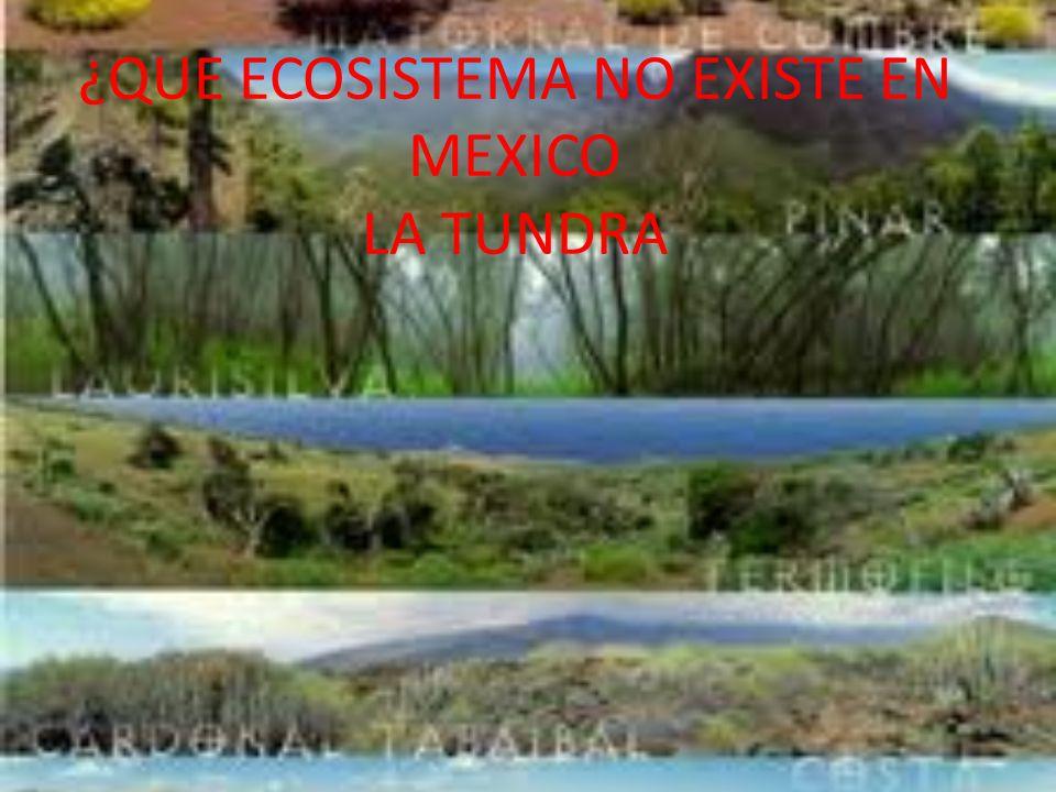 ¿QUE ECOSISTEMA NO EXISTE EN MEXICO LA TUNDRA