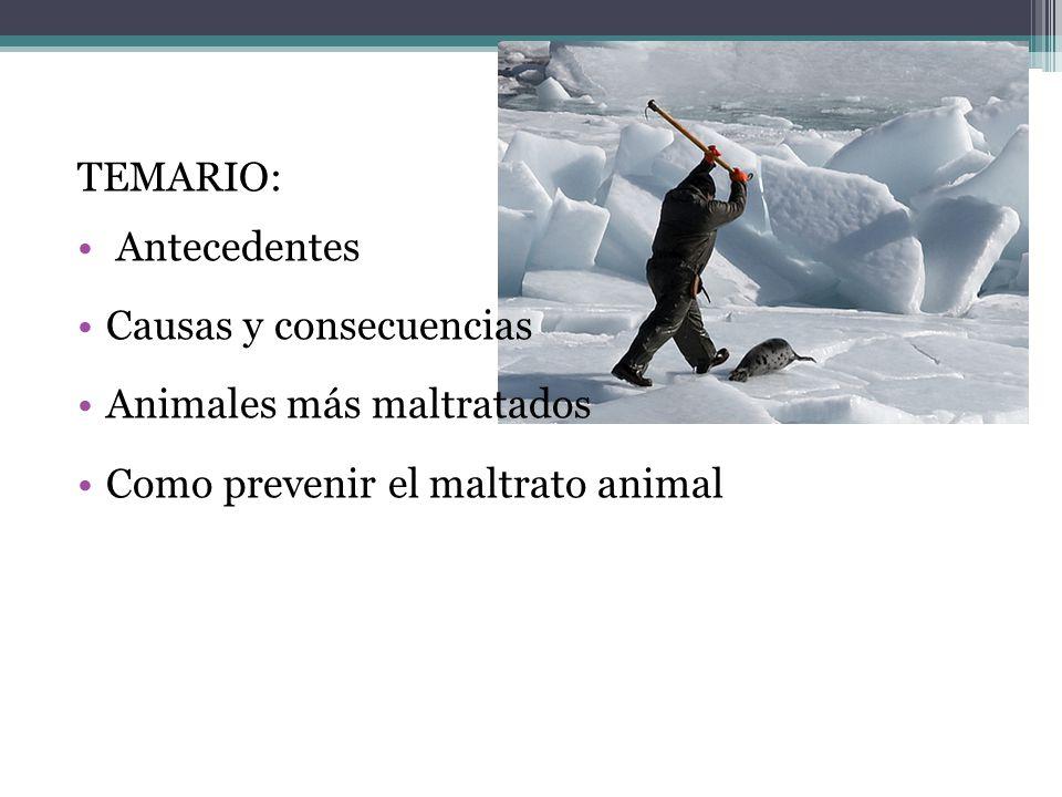 TEMARIO: Antecedentes. Causas y consecuencias. Animales más maltratados.