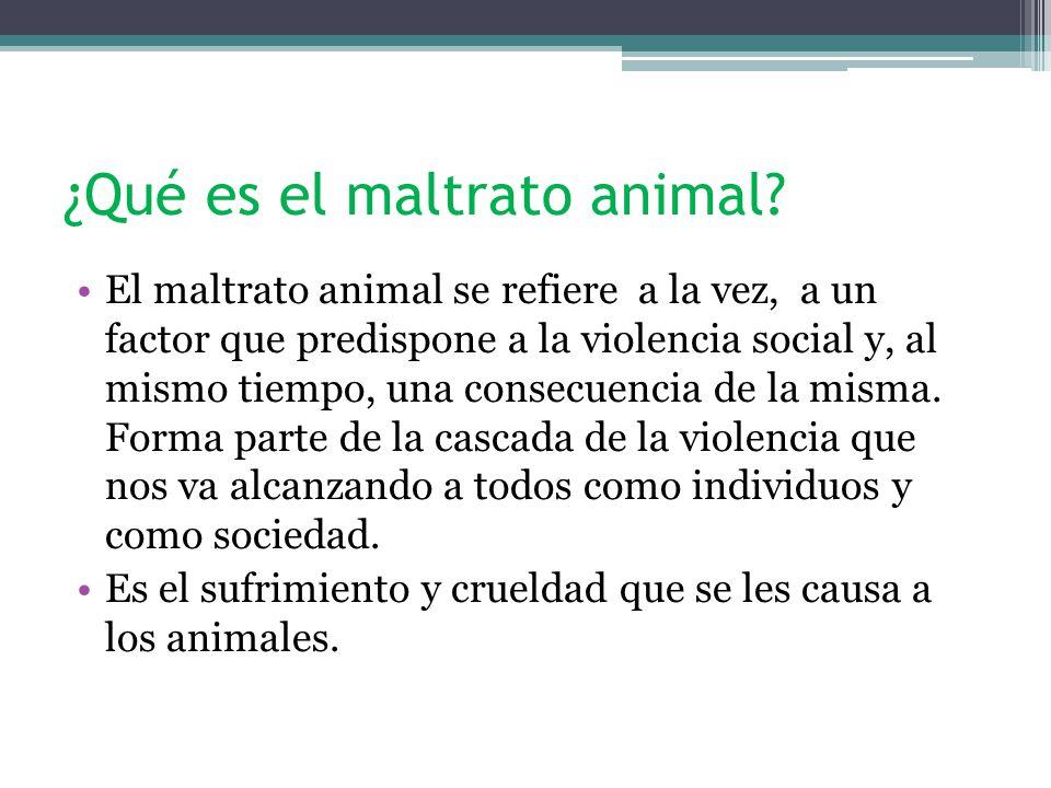 ¿Qué es el maltrato animal