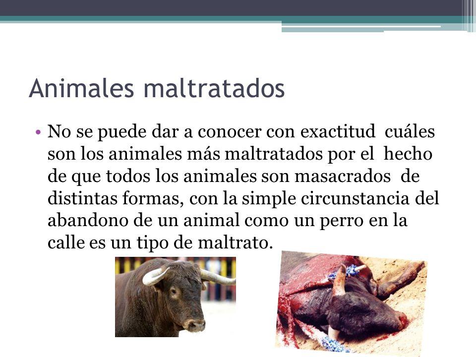 Animales maltratados
