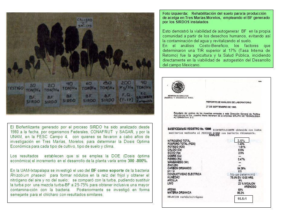 Foto izquierda: Rehabilitación del suelo para la producción de acelga en Tres Marías Morelos, empleando el BF generado por los SIRDOS instalados