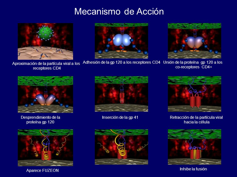 Mecanismo de Acción Aproximación de la partícula viral a los