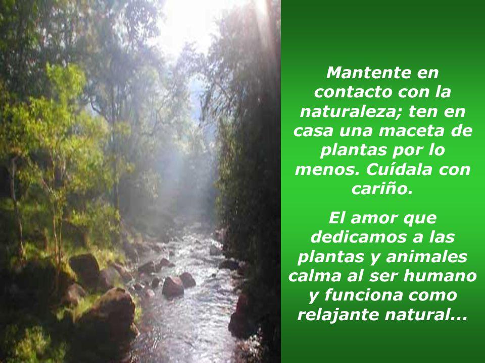 Mantente en contacto con la naturaleza; ten en casa una maceta de plantas por lo menos. Cuídala con cariño.