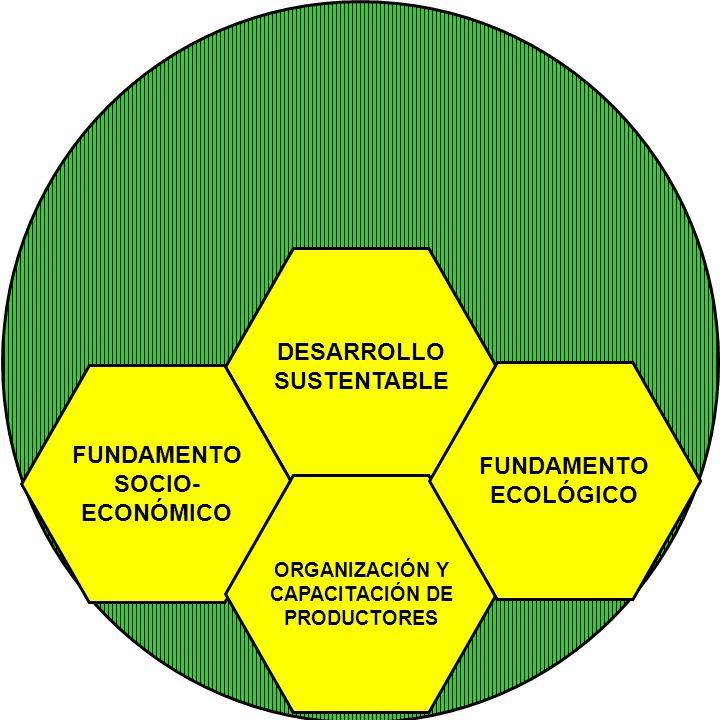 DESARROLLO SUSTENTABLE FUNDAMENTO FUNDAMENTO SOCIO- ECOLÓGICO