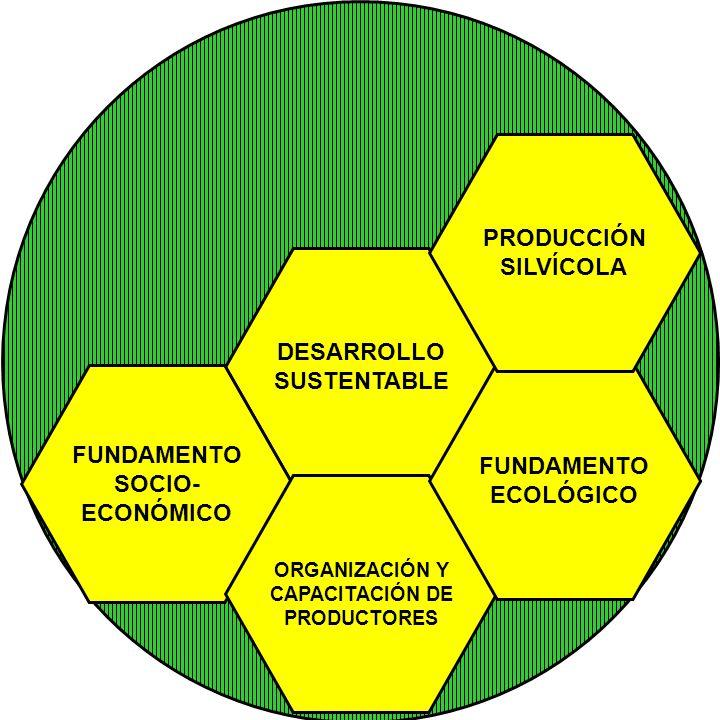 PRODUCCIÓN SILVÍCOLA DESARROLLO SUSTENTABLE FUNDAMENTO FUNDAMENTO