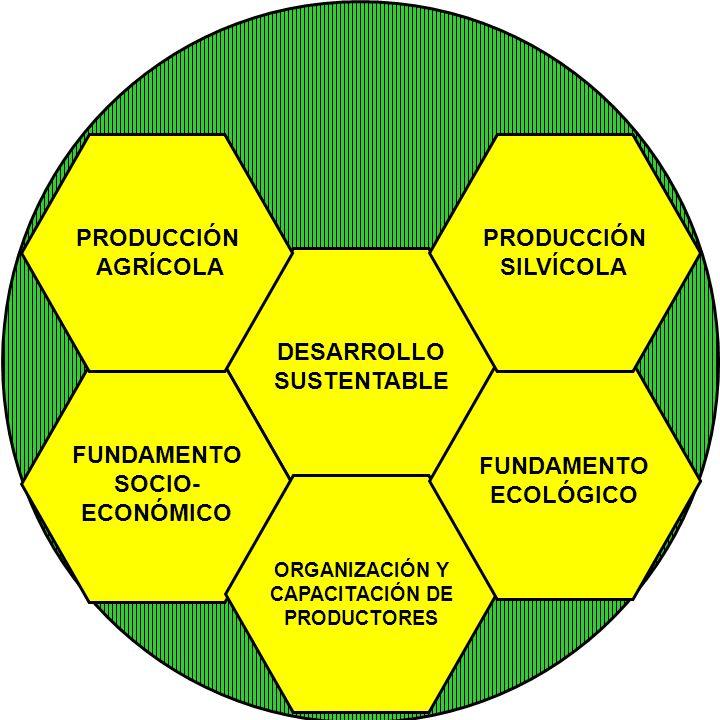 PRODUCCIÓN AGRÍCOLA PRODUCCIÓN SILVÍCOLA DESARROLLO SUSTENTABLE