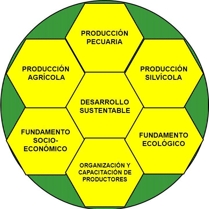 PRODUCCIÓN PECUARIA PRODUCCIÓN AGRÍCOLA PRODUCCIÓN SILVÍCOLA