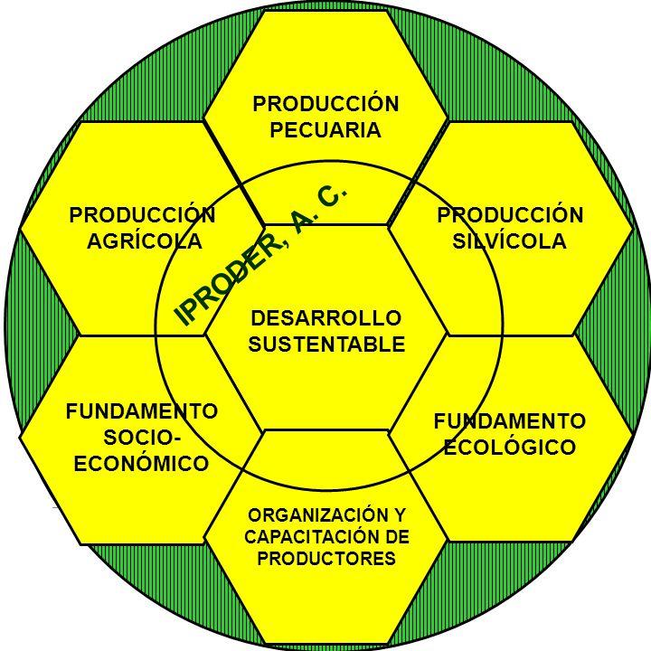 IPRODER, A. C. PRODUCCIÓN PECUARIA PRODUCCIÓN AGRÍCOLA PRODUCCIÓN
