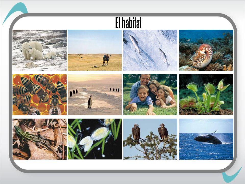 El hábitat