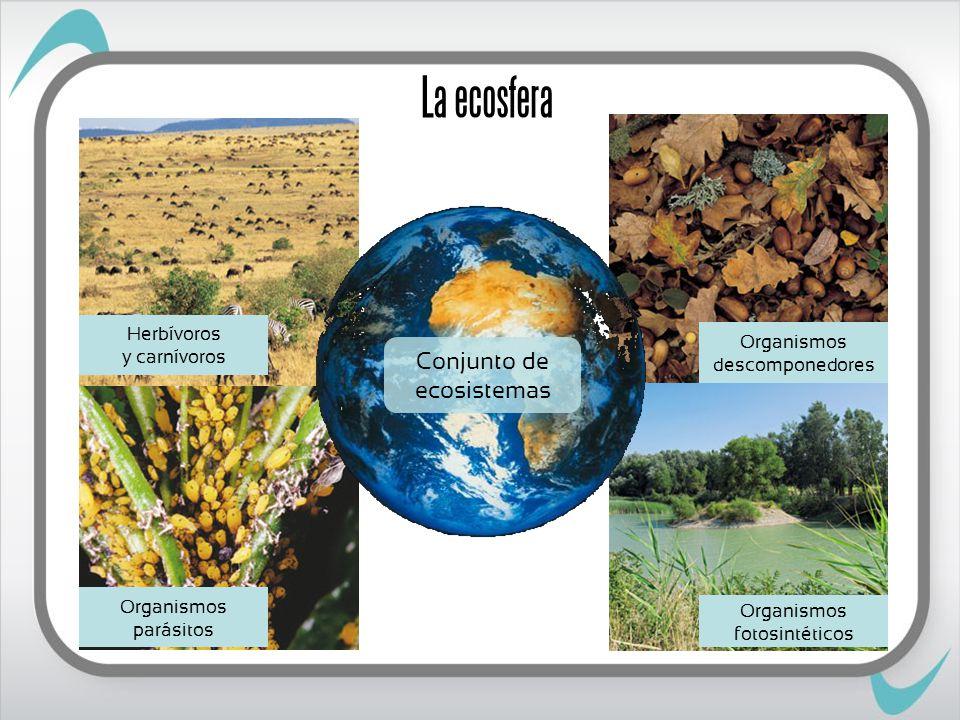 La ecosfera Conjunto de ecosistemas Herbívoros y carnívoros