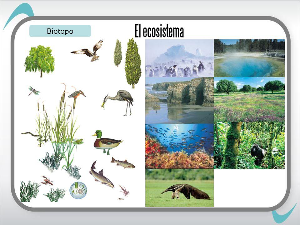 El ecosistema Biotopo