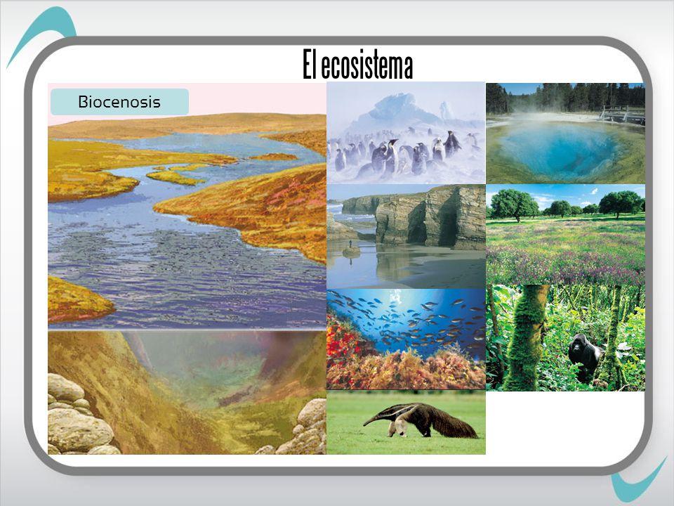 El ecosistema Biocenosis