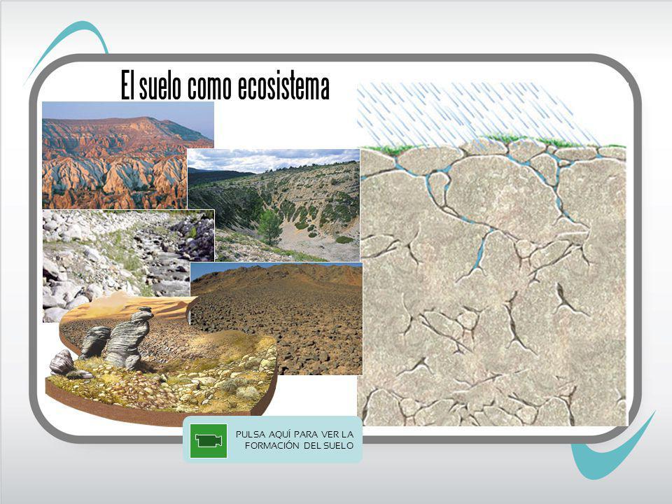 El suelo como ecosistema