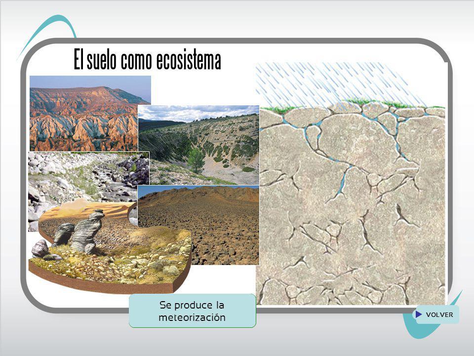 Los ecosistemas de la tierra ppt descargar for Como se forma y desarrolla el suelo
