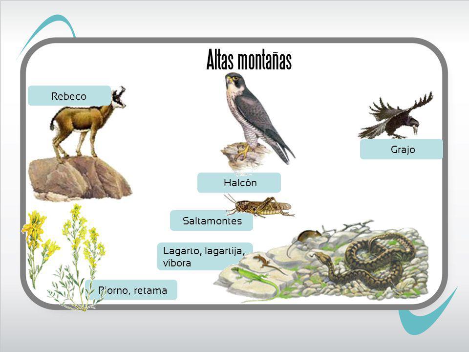Altas montañas Rebeco Grajo Halcón Saltamontes