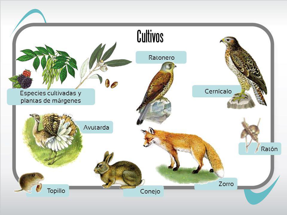 Especies cultivadas y plantas de márgenes