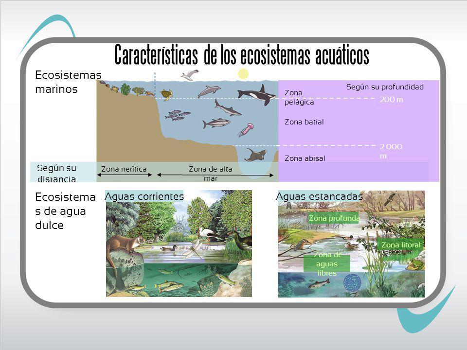 Características de los ecosistemas acuáticos