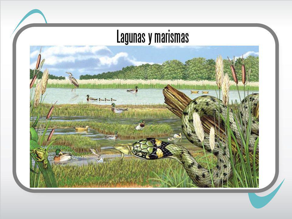 Lagunas y marismas