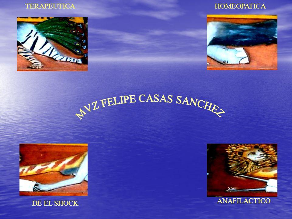 MVZ FELIPE CASAS SANCHEZ